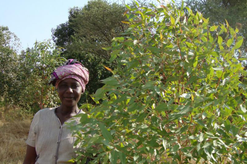 Tanzania Agroforestry Project